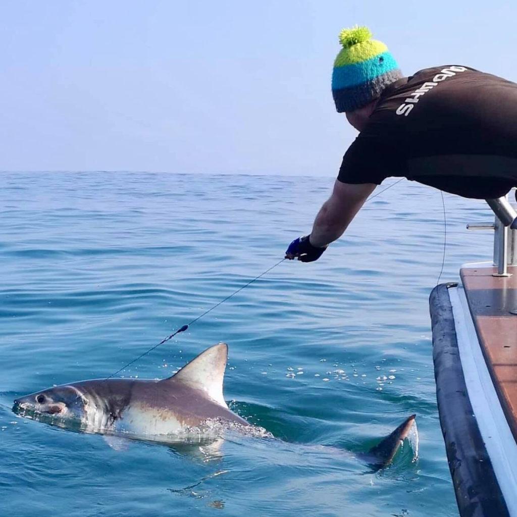 shark fishing 01